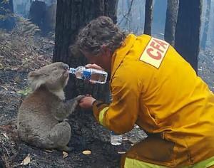 Buschbrände in Victoria